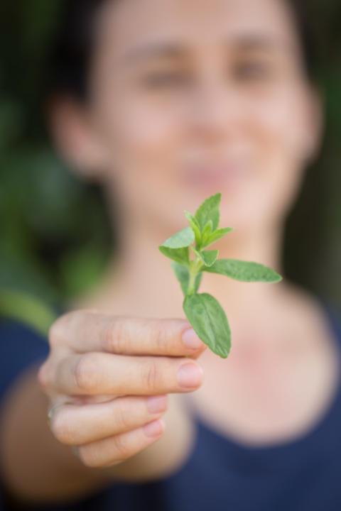 Stevia kan bli ny behandling mot Borrelia