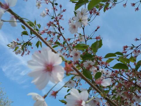 Kom och plantera Barnens träd i Järfälla den 17 och 19 maj!