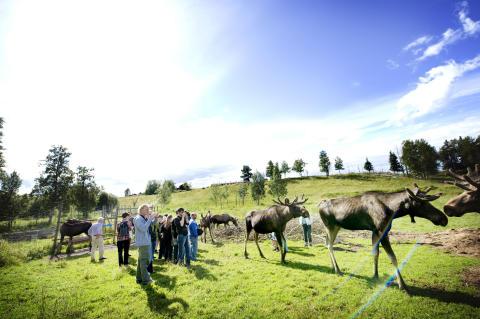 Visit a Moose