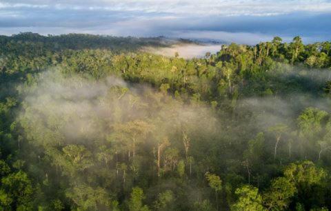 Brother tukee Cool Earthin 'Rainforest Revolution' 10-vuotiskampanjaa