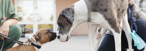 Föreläsning för nyblivna hundägare; Välkommen valp!