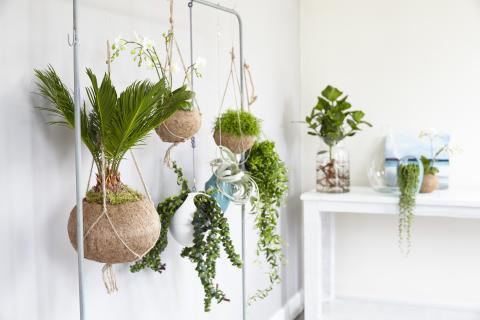 Nyhet: Kokodama - handgjord, 100% naturlig kruka med växt