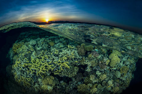 © Tobias Friedrich, Germany, Shortlist, Professional competition, Natural World & Wildlife, 2020 Sony World Photography Awards