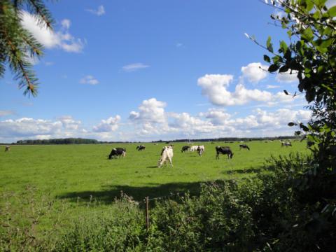 MIV: Steigende Preise für Milchprodukte