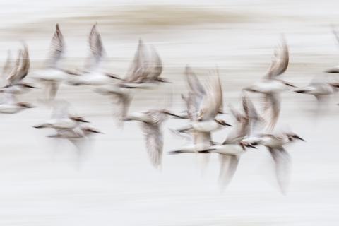 Mariusz Stanosz, Flying swarm