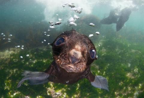 Sea baby, fot. Andrey Narchuk