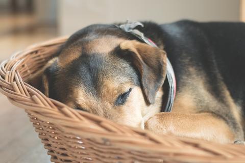 Hälften av hundarna ensamma hemma dagtid
