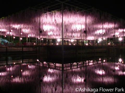 Ashikaga Flower Park(3)