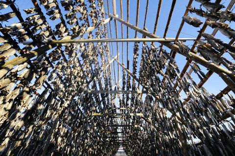 Rekordsterk torskeeksport