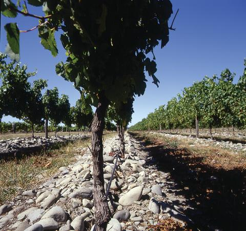 stones in vineyard