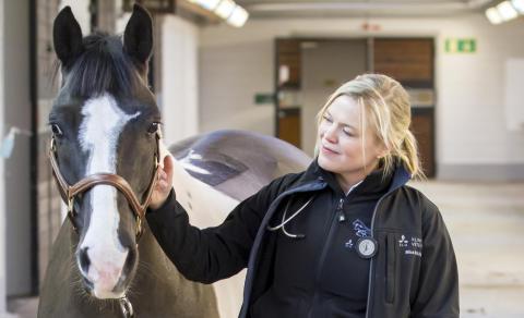 Uppsalaforskare får stipendium – går till botten med livshotande hästsjukdom