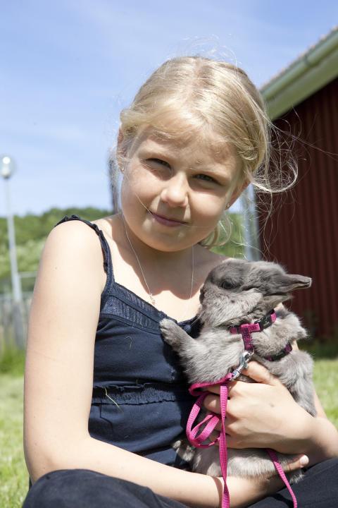 Svenska Blå Stjärnans djurläger för barn