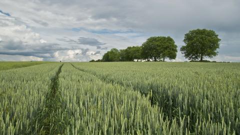 Glyfosatförbud problematiskt för lantbruket - brist på alternativ