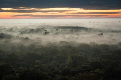 Skal plantager og regnskove tælle lige meget i klimaregnskaber?