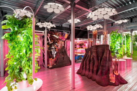 Sammen med Tom Dixon vil IKEA udforske urban farming. Samarbejdet lanceres i 2021