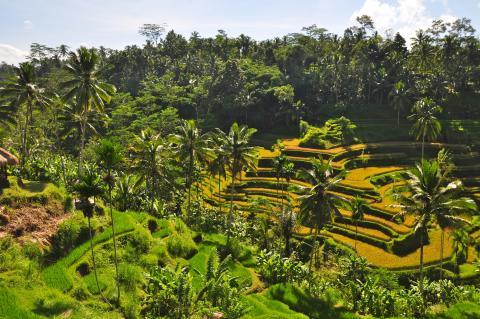 Vintern 2014/15: Bali tillbaka på charterkartan