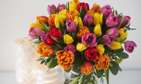 2.bilde slik steller du tulipan