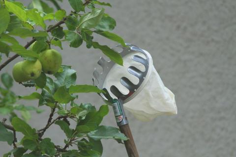 Äppelplockare eller fruktplockare