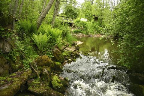 Miljö i Säterdalen