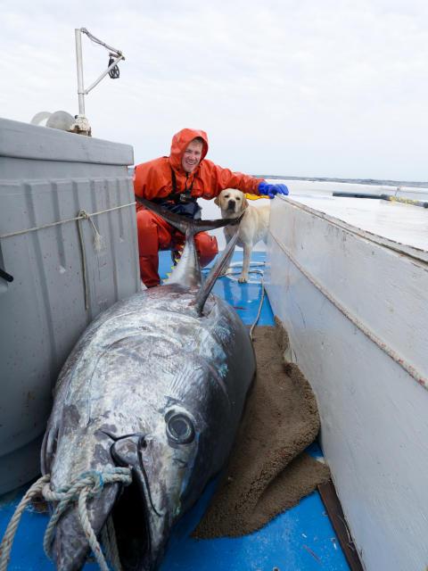 Wicked Tuna - Nord mod Syd
