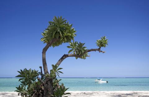 Mauritius_Palme am Strand©MTPA_Bamba