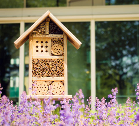 Akut bostadsbrist för vildbin - nu öppnar Blocket Bostad upp för bihotell