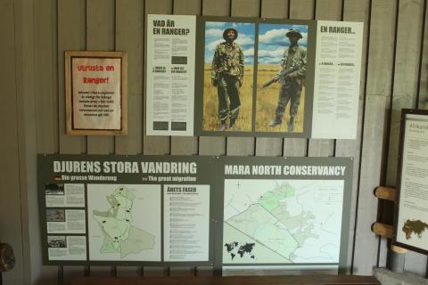 Hjälp till att skydda elefanterna i Masai Mara