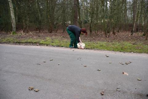 Center Parcs gives toads a helping hand