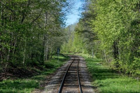 Sveriges vackraste tågresa bild 8  -  Skogsbild