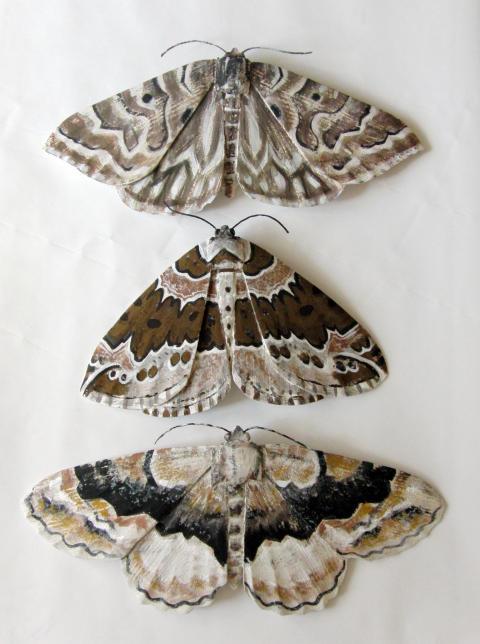 Sam Stigsson – Tre fjärilar