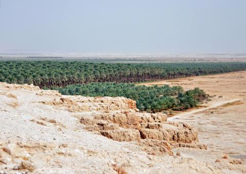 Bosättares odlingar av dadlar i Jordandalen/Västbanken