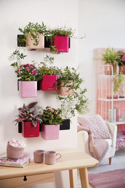 Eine grüne Wand zum Wachsen und Gedeihen: Green Wall Home Kit Glossy Kiss