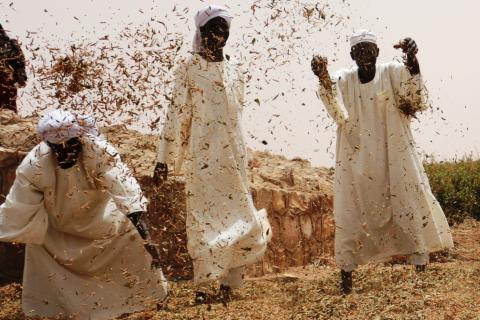 Marketing Darfur: can trade bring peace and stability to a troubled region?