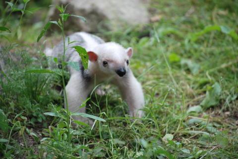 Babyboom i Parken Zoo i Eskilstuna