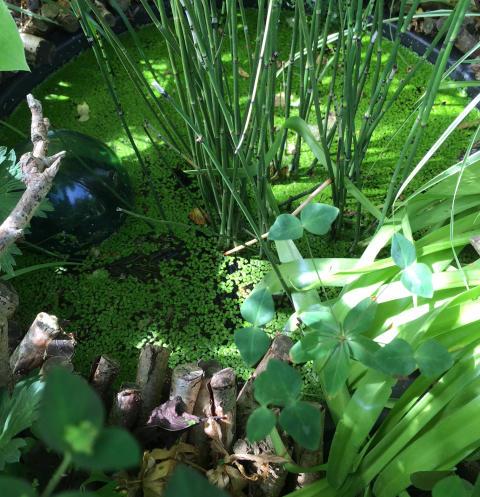 Sæsonstart i haven: Det er jeres tur til at hjælpe naturen