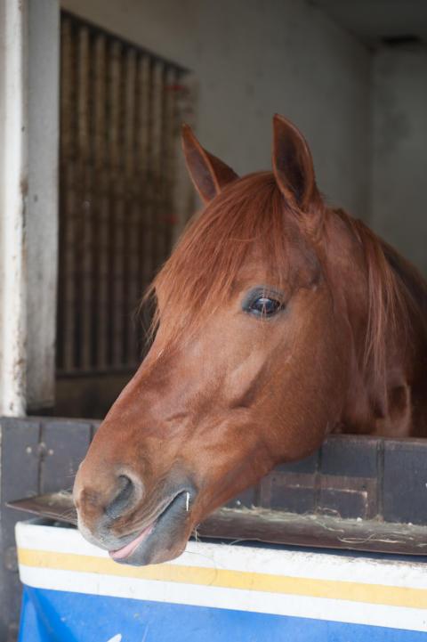 Två svensktränade hästar i Prix du Languedoc