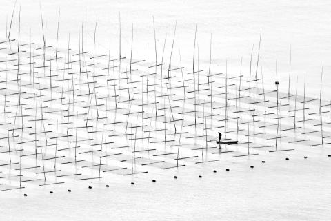 Farming the Sea, fot. Tugo Cheng