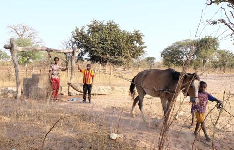 WTG-Gambia-Pferd-Brunnen