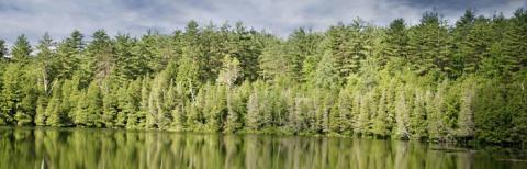 Högre skogsmarkspriser i hela landet första halvåret 2017
