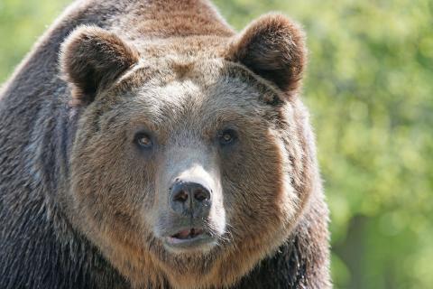 Påminnelse om pressinbjudan – följ med när landshövding Ylva Thörn letar björnspillning