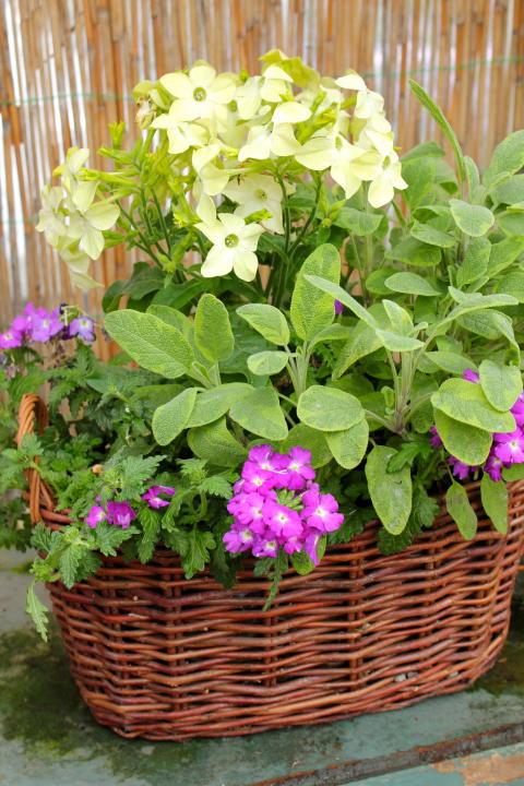 Blommor och kryddor tillsammans