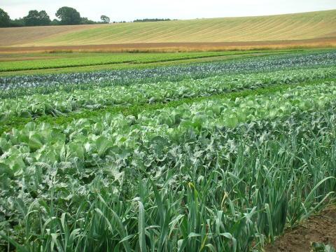 20 procent av jordbruksmarken brukas ekologiskt