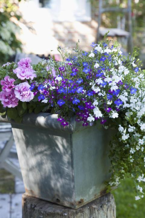 Recept på en lyckad plantering juli