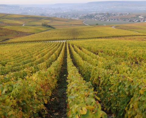 Palmer & Co_Kooperativ med hundratals vinodlare