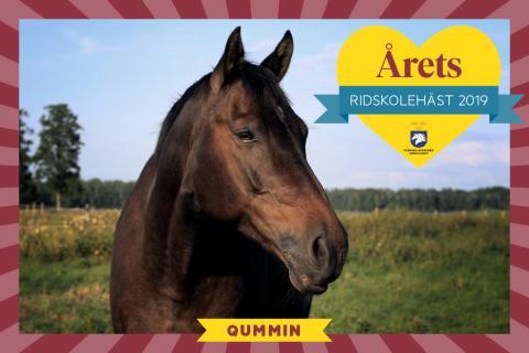 Kloke Qummin är Årets ridskolehäst