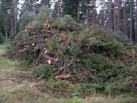 Mark och vatten försuras mindre än befarat av grot-uttag i skogen