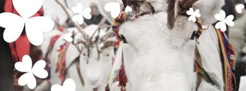 Åter dags för Jokkmokksdagarna i Huddinge Centrum!