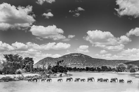 Ewaso Nyiro River, Samburu, Kenya