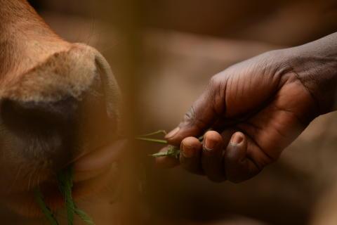 15 000 mjökbönder stöds av investeringen