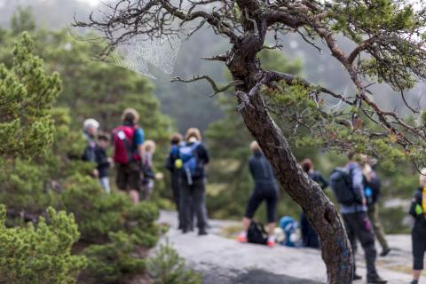 Vandring, en livsstilsupplevelse i Sverige